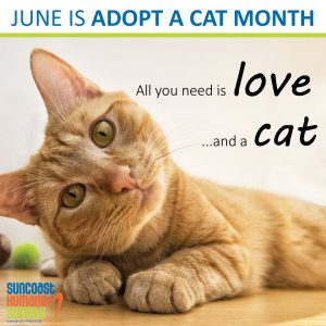 June Is Adopt A Cat Month