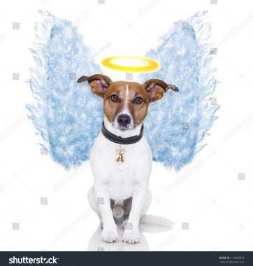 stock-photo-angel-dog-feather-wings-aura-nimbus-117069823